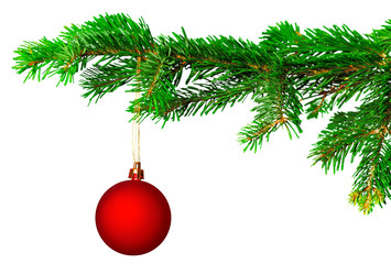 christmas ball on fir branch isolated on white background