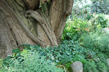緑の世界 木の幹 植物