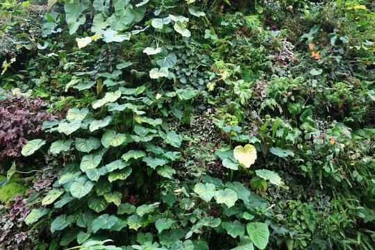 緑の壁 葉っぱ ガーデニング