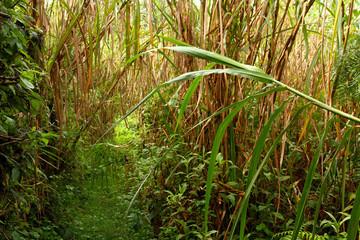 Overgrown Jungle Trail
