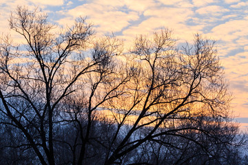 winter morning and silhouette of a tree with a bird