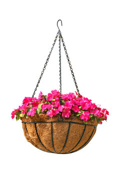 Hanging basket of beautiful flowers isolated on white background