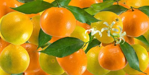 Fototapete - image of many oranges close up