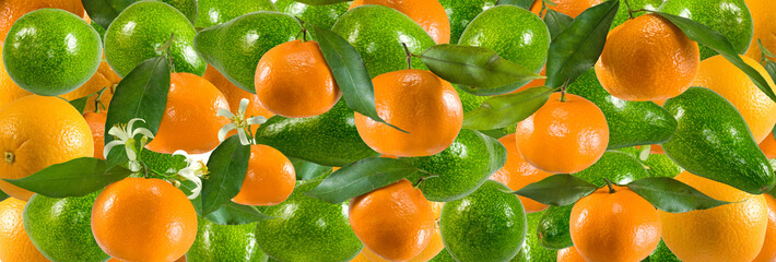 Fototapete - image of many tangerines closeup