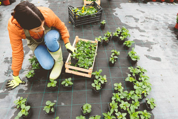 Florist preparing flowers for planting