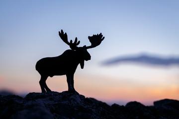 Moose on rock during sunset