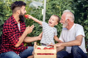Three generations work in greenhouse