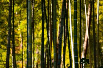 日差しが優しい晩秋の竹林