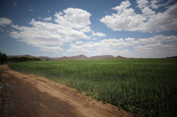 Wheat grows on a farm beside the Orange River, near Van Der Kloof