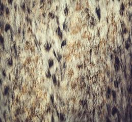 Close up leopard spot pattern texture background. wallpaper