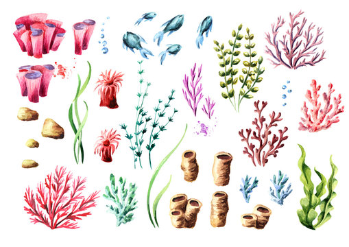 Corals and aglae set. Watercolor hand drawn illustration, isolated on white background