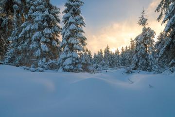 Sonnenuntergang im Winter Wald mit Schnee