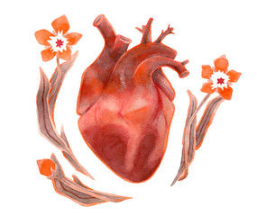 Watercolor human heart with flowers on white