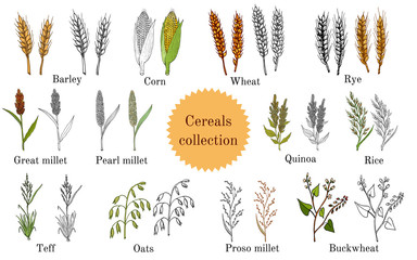 Hand drawn set of culinary agricultural cereals