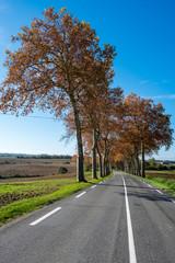 Ligne droite campagne avec ligne blanche continue, alignement de platanes sans voiture, autmne, Tarn, France
