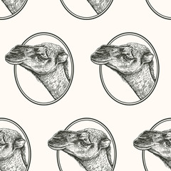 Seamless pattern with portrait of camel.