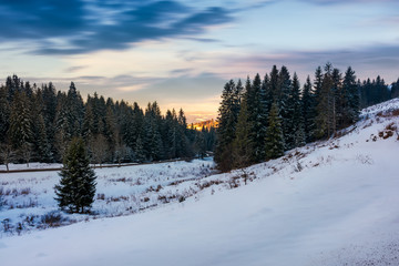 coniferous forest on the snowy hill at sunset. beautiful winter scenery in cold weather conditions. beautiful cloudy sky above the scenery.