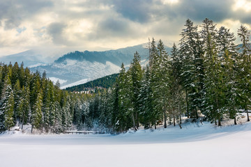 beautiful winter landscape in mountains. spruce forest around the snow covered meadow on a cloudy day. composite imagery