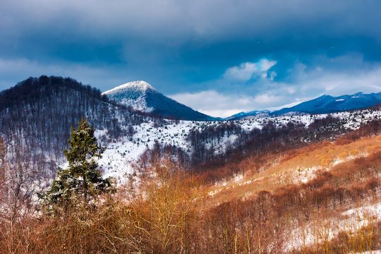 winter in Uzhanian National Nature Park. beautiful nature scenery with snowy peaks