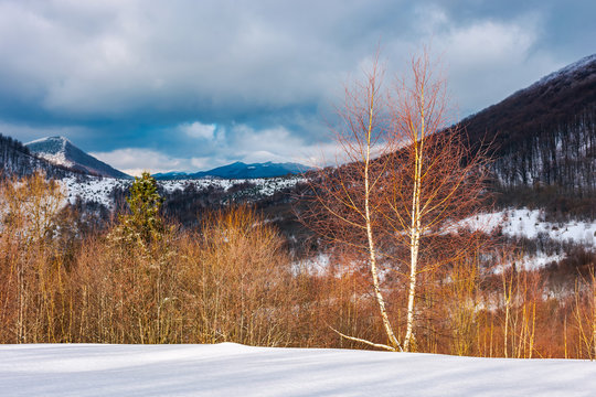 dramatic winter landscape in mountains. leafless birch forest on a snowy slope in sun light. distant mountains in shade of a cloud