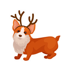 Funny corgi dog with reindeer horn hoop. Adorable home pet. Domestic animal. Flat vector element for postcard