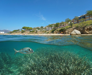 Beach coastline in Roses town and a gilt-head bream fish with seagrass underwater, split view half above and below water surface, Spain, Costa Brava, Mediterranean sea, Catalonia