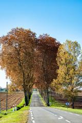 route en ligne droite bordée de champs labourés avec alignement de platanes au loin, Tarn, automne, France