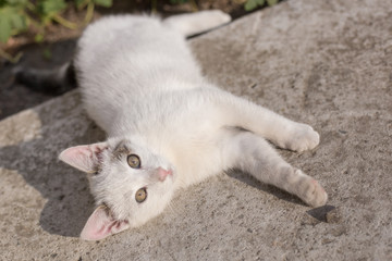 Little white cat with green eyes lay on cement