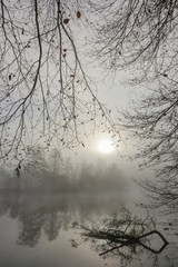 bare branches at the riverbank with fog in winter,  death meassages concept