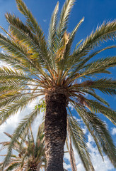 A palm tree in a tourist paradise