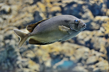 Exotic fish in a marine aquarium