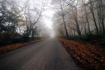 Road and trees in a mist