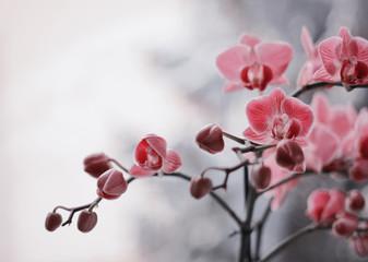 Leinwandbilder - Kwitnące storczyki