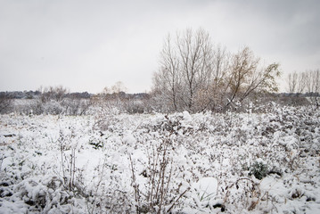Snow Covered Trees in a Snowy Field of weeds