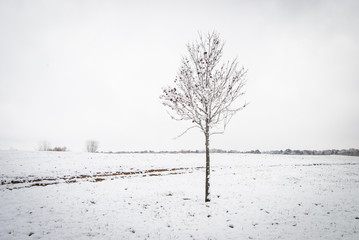 Snow Covered Tree in a Snowy Field