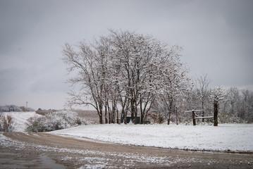 Winter Tree Line in Snowy Field with Dumpsters