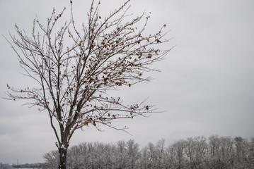 Winter Tree in a snowy field