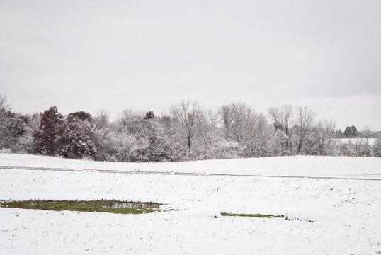 Winter Tree line in a snowy field