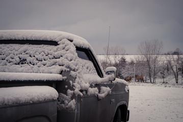Vintage Truck Overlooking Deer Feeding at tree line of snowy field