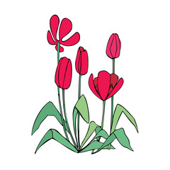Red tulips growing out of the ground. Stylized isolated vector color image.