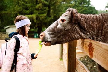 Girl feeding cow on farm