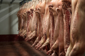 Dead slaughtered pigs hanging in butchery slaughterhouse. Fresh pork meat.