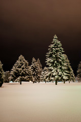 Snow covered pine trees on field at night