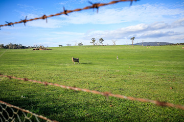 Sheep station in Australia