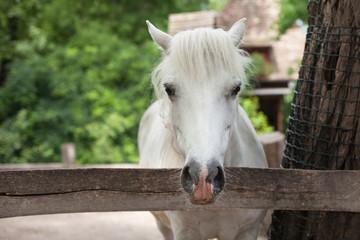 beautiful graceful horse posing,