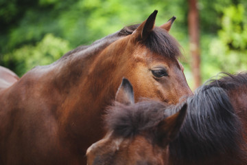 two beautiful graceful horses posing, farm life