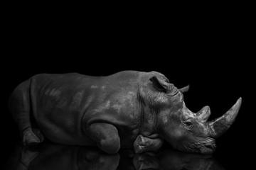 beautiful big adult rhinoceros poses, rare animal Wall mural