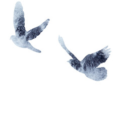 isolated, watercolor bird silhouette, dove flying, flock of birds
