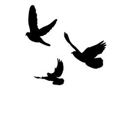 flock of birds flying, silhouette