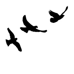silhouette, dove flying, lilac flock of birds